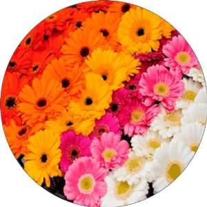 Gerbera Flowers Art   Fridge Magnet   Fibreglass reinforced plastic