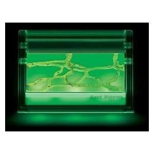 Illuminated Ant Farm Gel Colony Live Ant Habitat Toys & Games